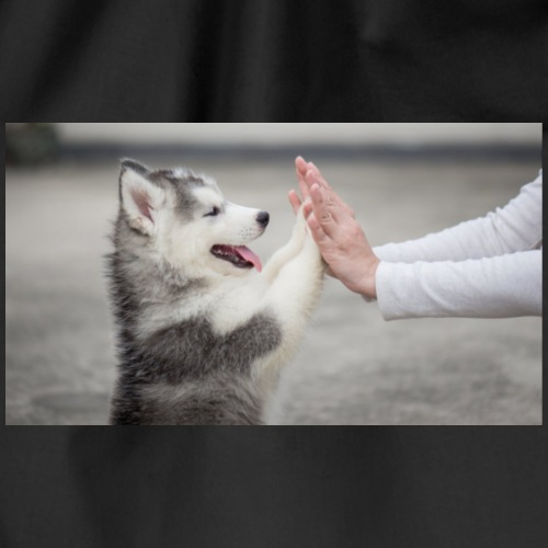 cute litle husky - Gymtas