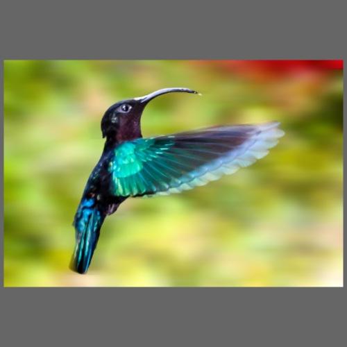 Geschenkidee Kolibri im Flug