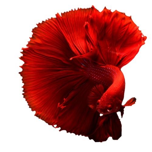 Wundervoller Fisch