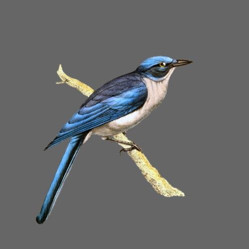 Bird blue - Turnbeutel