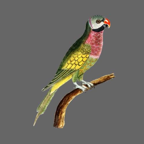 Papagei - Turnbeutel