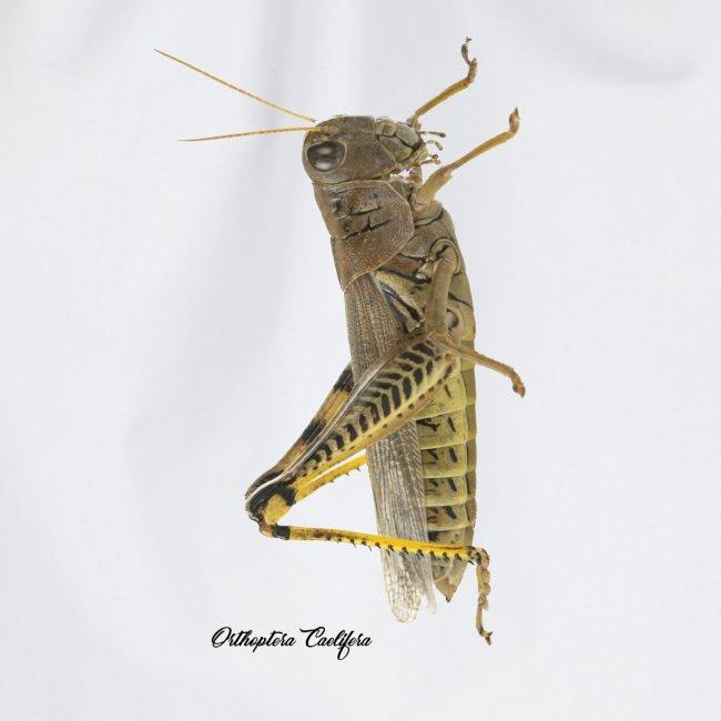 Orthoptera Caelifera