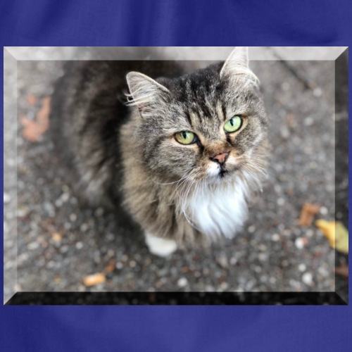 Katze, Kätzchen Torti - Turnbeutel