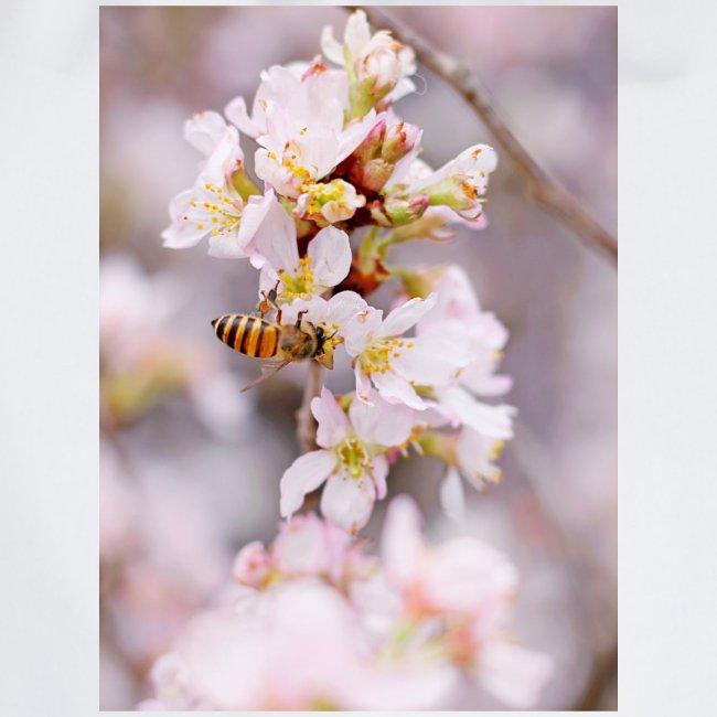 Schöne Biene 1