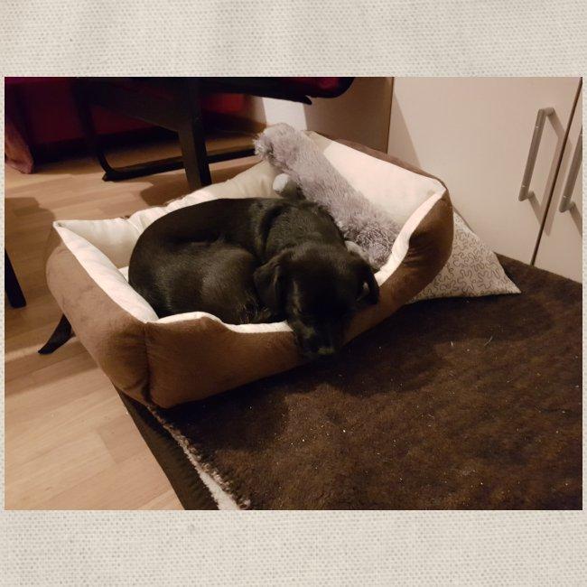 Hund im Hundekörbchen
