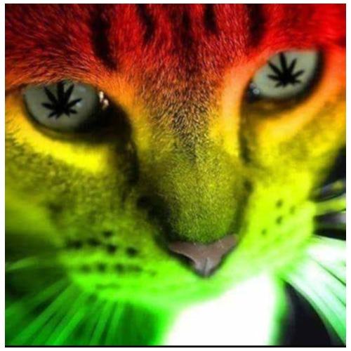 Katzen Design - Turnbeutel