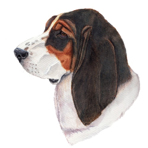 bassethound color - Let sweatshirt med hætte, unisex
