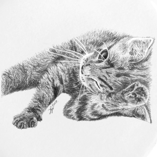 Small kitten in gray pencil