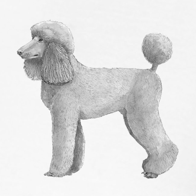 poodle standard abricot ink