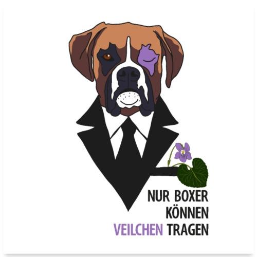 Hunde Boxer Veilchen Poster - Poster 60x60 cm