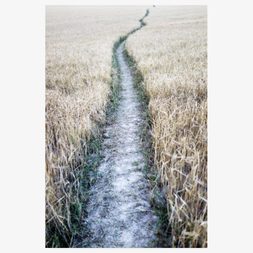 dry crops alley - Poster 20x30 cm