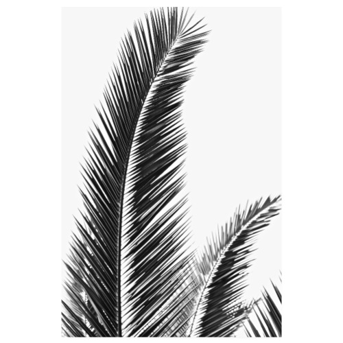 Palmier Affiche - Black and White Palm Tree - Poster 20 x 30 cm