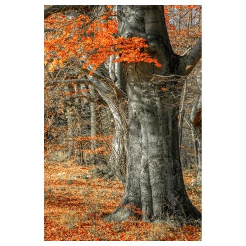 Farbenfroher Herbstwald alte Bäume - Poster 20x30 cm