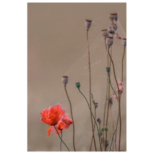 Romantisches Bild Mohnbluete Mohn Blume - Poster 20x30 cm