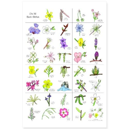 Bach-Blüten Poster handgezeichnet - Poster 60x90 cm