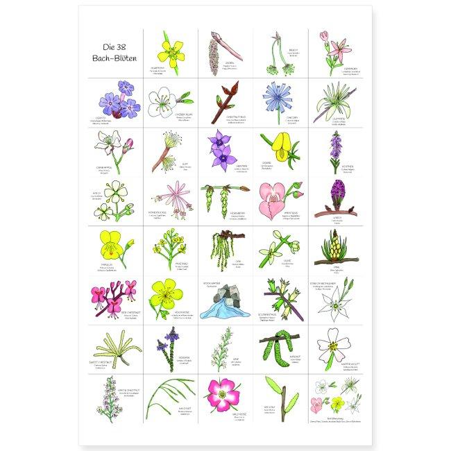 Bach-Blüten Poster