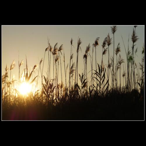 Sonnenuntergang - Poster 90x60 cm