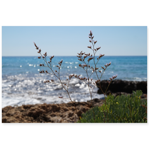 Küstenpflanzen - Poster 90x60 cm