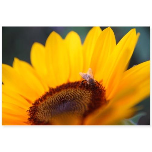 Sonnenblume - Sommer - Poster 90x60 cm