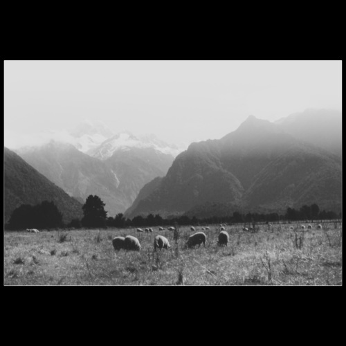 Mountain Sheeps / Analog Fotografie - Poster 90x60 cm