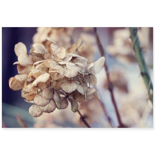 Hortensie Winter | Hydrangea - Poster 90x60 cm
