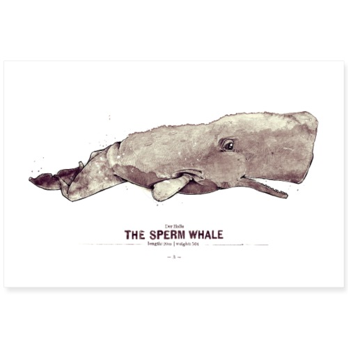 Pottwal (The Sperm Whale) - Poster 90x60 cm