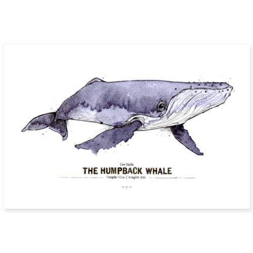 Buckelwal (The Humpback Whale) - Poster 90x60 cm