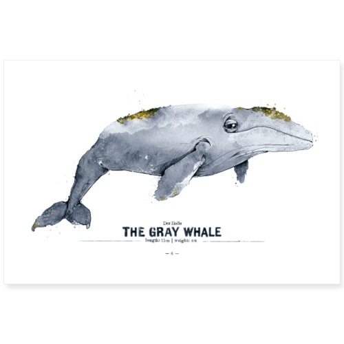Grauwal (The Gray Whale) - Poster 90x60 cm