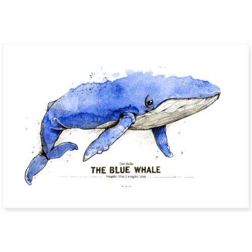 Blauwal (The Blue Whale) - Poster 90x60 cm