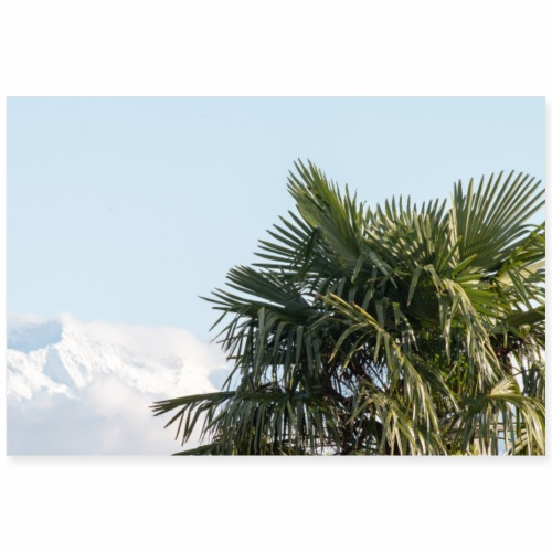 Palmier devant les Alpes enneigées - Poster 90 x 60 cm