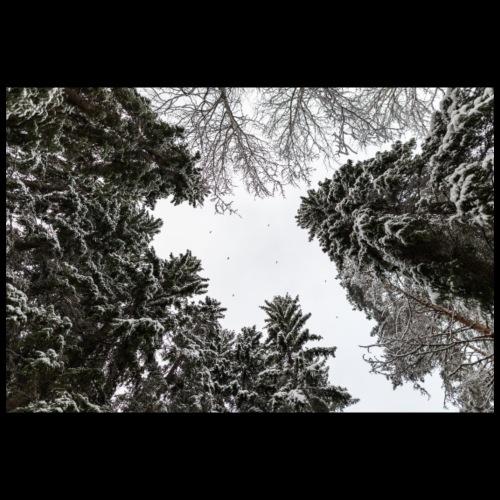Talvinen metsä - Juliste 90x60 cm