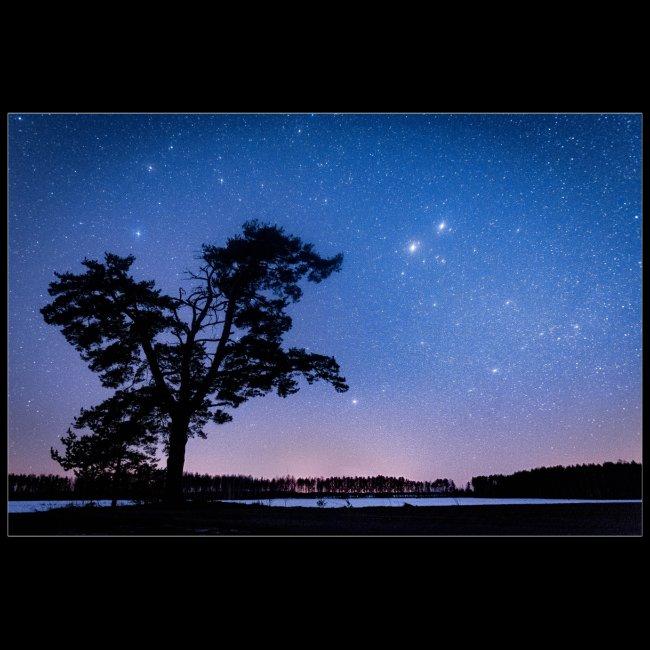 Puu tähtitaivaan alla