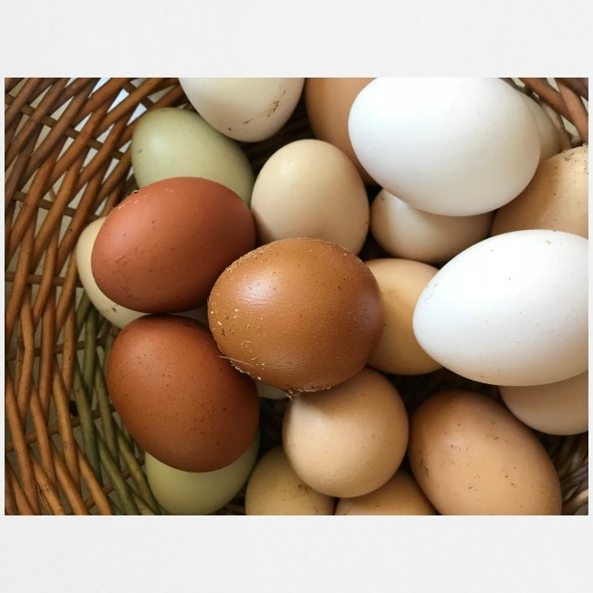 all my eggs in one basket