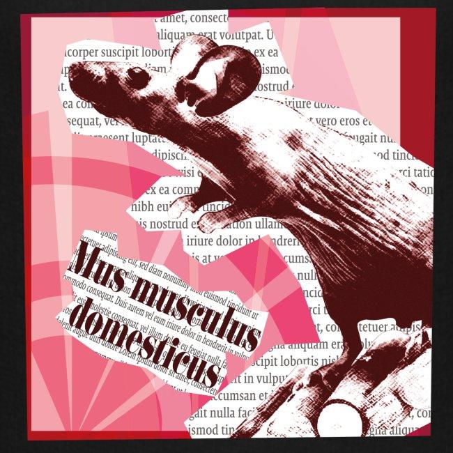 Mus musculus - punainen