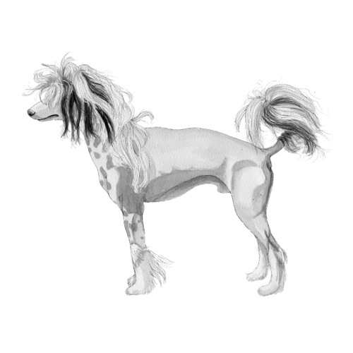 chinese crested Dog sticker - Sticker