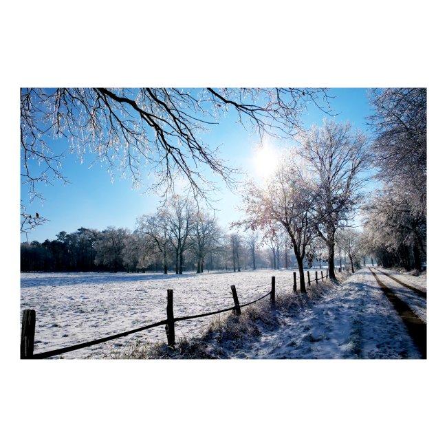Scherenbostel im Schnee