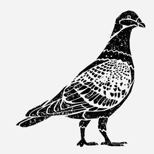 Taube   Pigeon   Stadttaube T-Shirt - Sticker