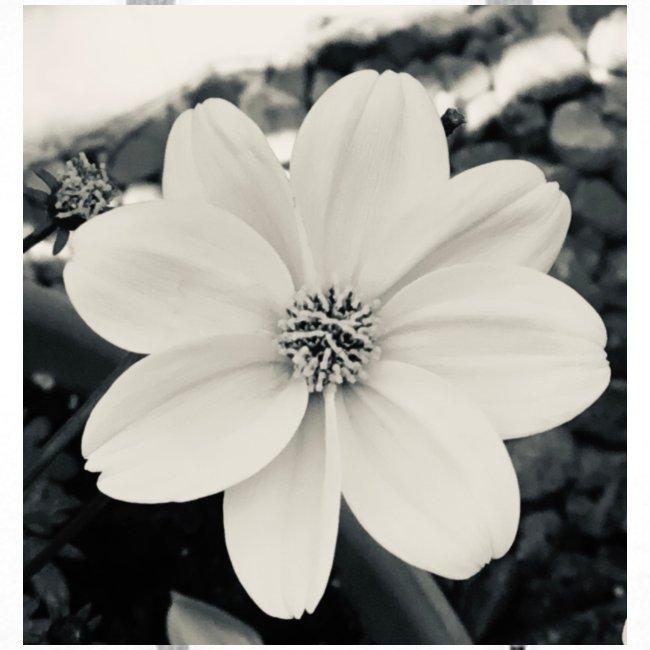 Blume Schwarz Weiß
