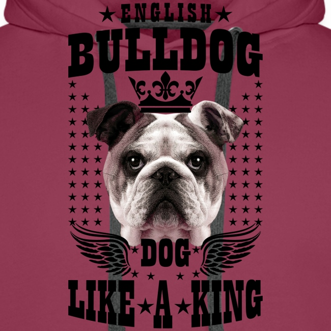 19 English Bulldog like a King Boss Bully Fun