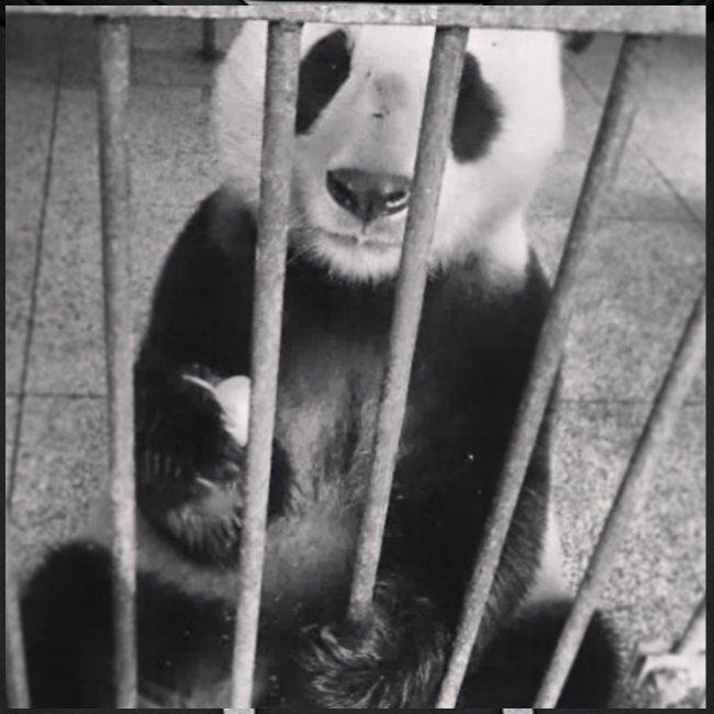 Pandazaki