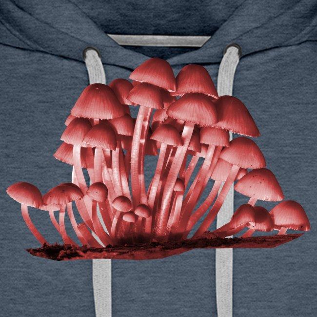 Pilze Stockschwämmchen Herbst