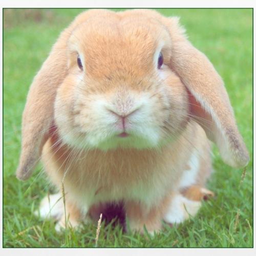 Bunny: Phone Case - Baby Organic Bib