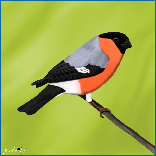 vogel dompfaff