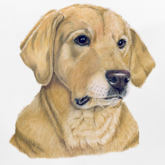 labrador yellow - pastel