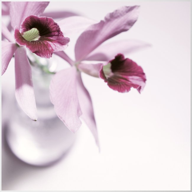 Orchid Vase Watercolor Minimalist