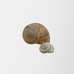 due shell - Tazze bicolor