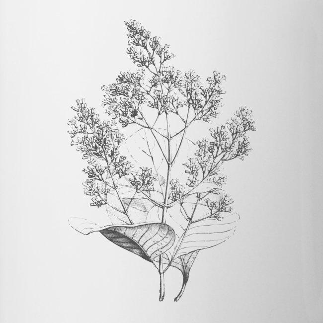 Elderberry drawing