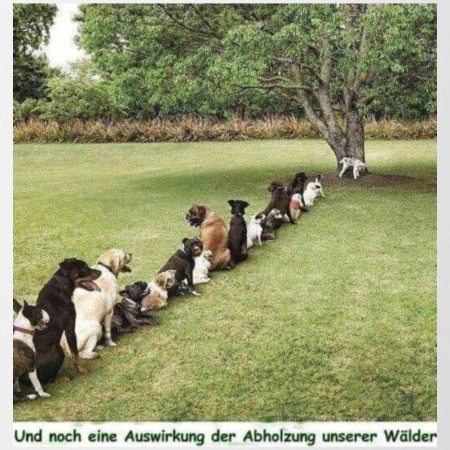 Auswirkung auf Abholzung :-)