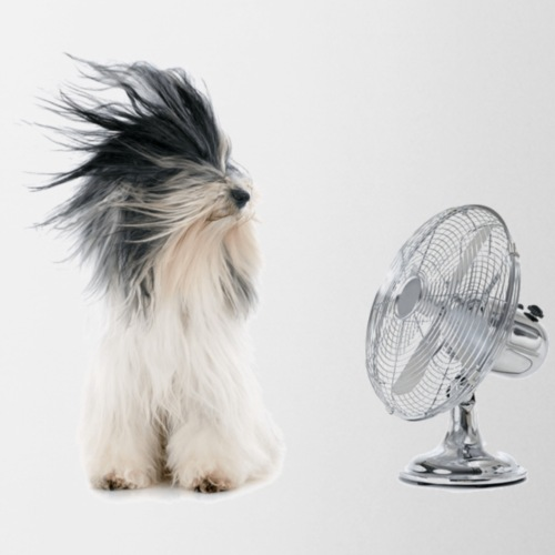 dog with fan