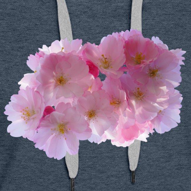 Kirsche Japan Frühling Blütenkirsche